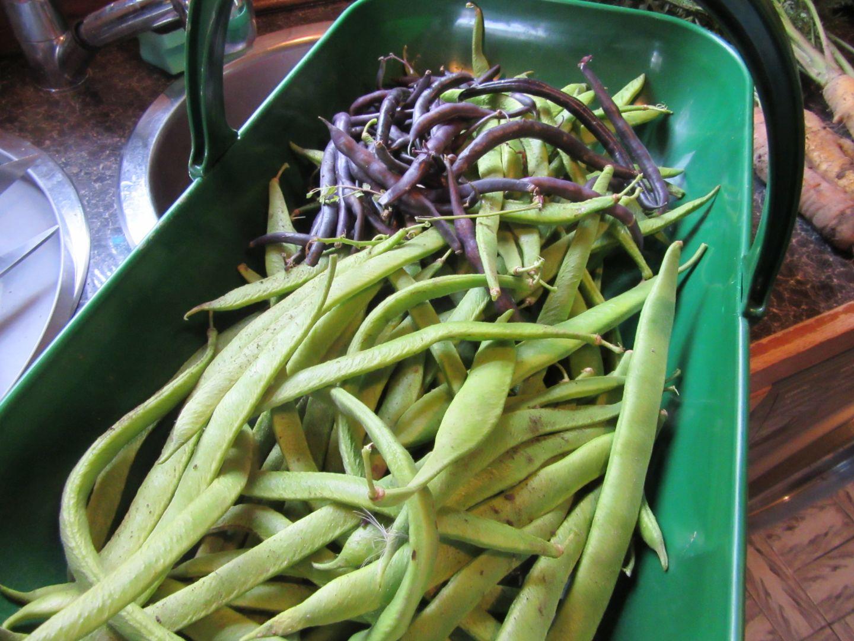 aug20_beans