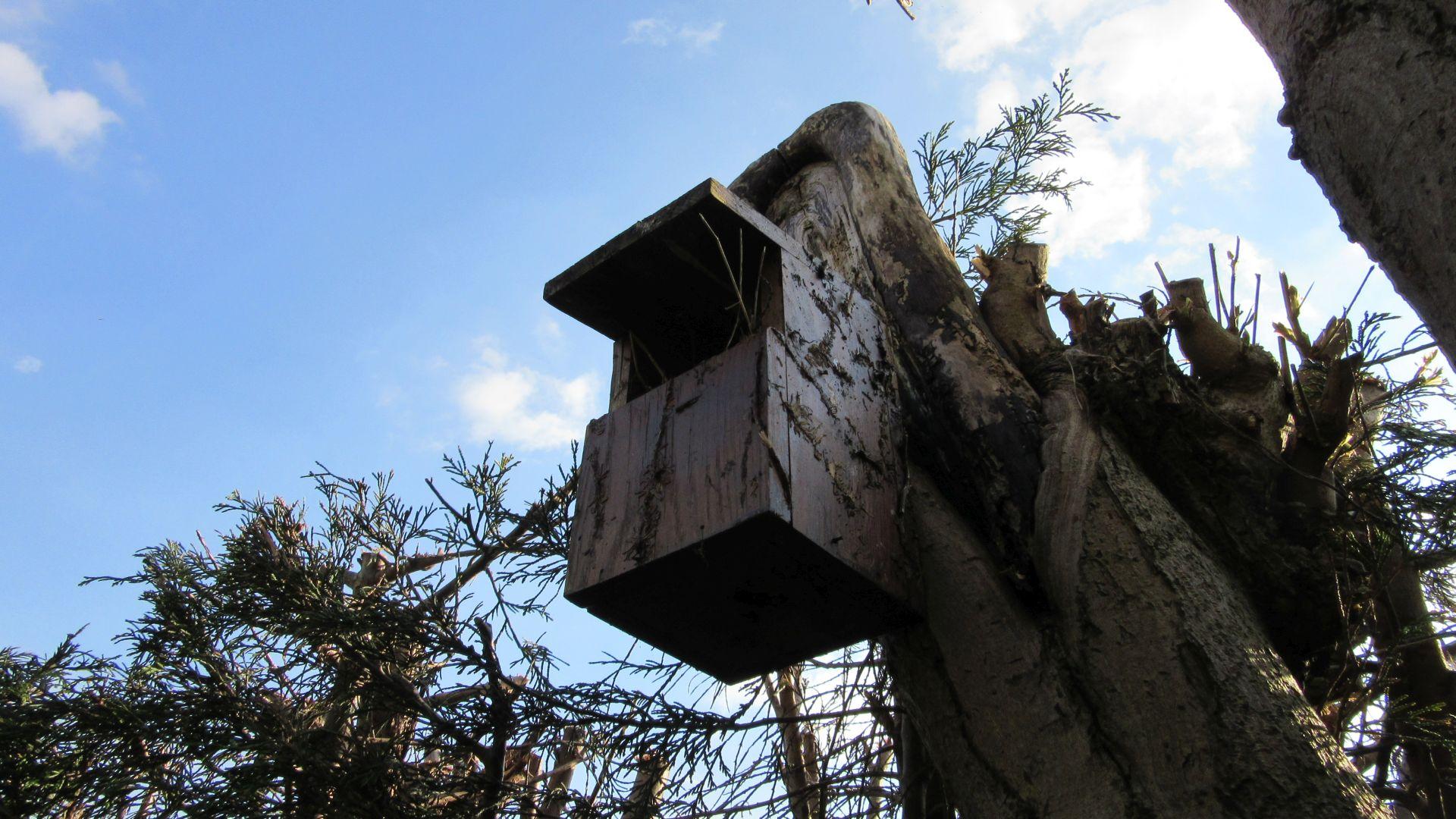 bird box 2.jpg