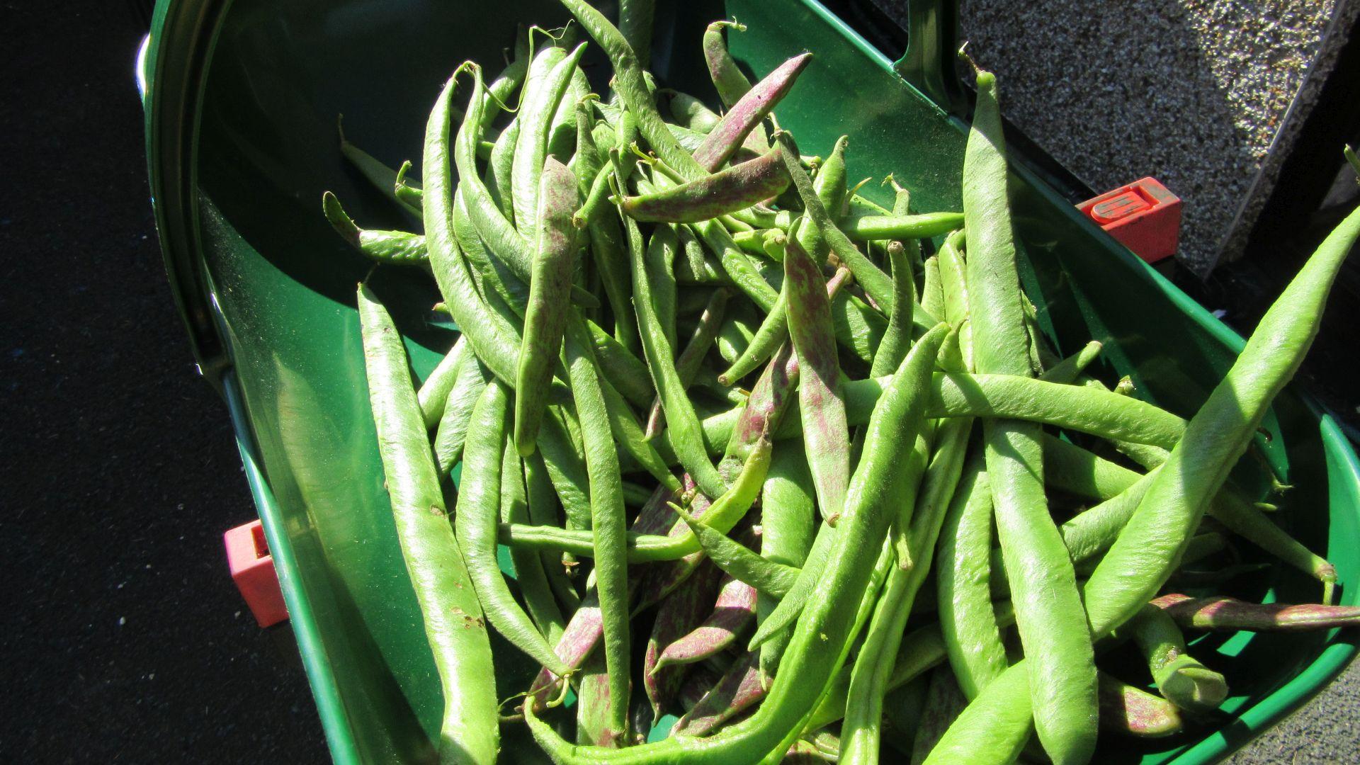 sep07_beans