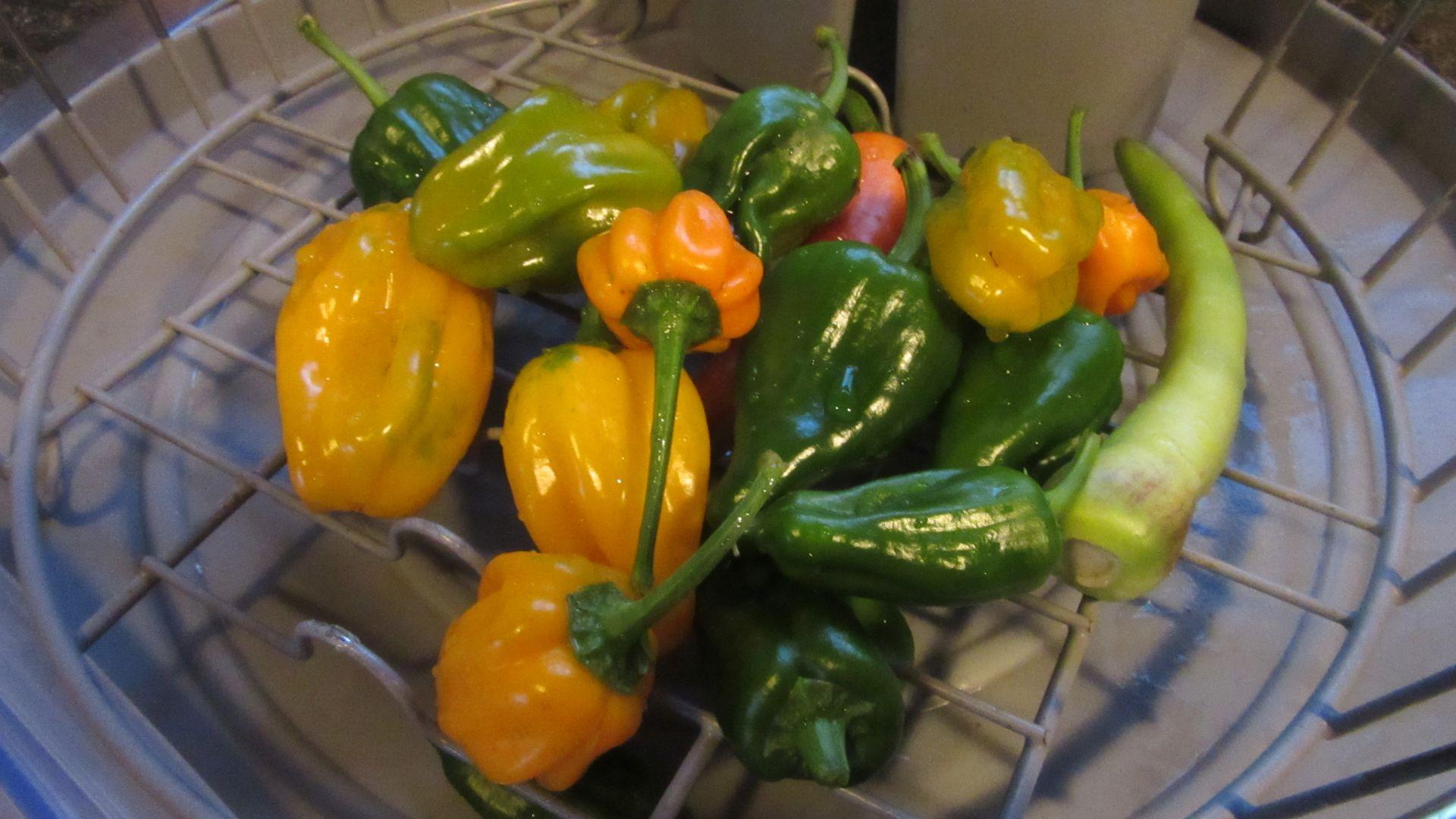 sep09_last_peppers